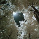 Jim Triezenberg, Invisible Nature