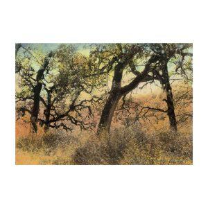 """Artist in the Glen Vista Gallery-Dianne Carroll Burdick, """"Lingering in the Landscape"""""""