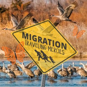 2019 Westminster Art Festival - Migration: Traveli...