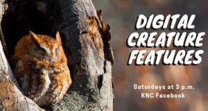 Digital Creature Features