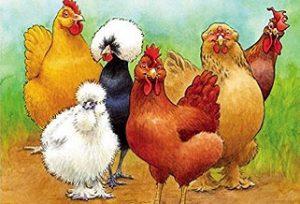 Hens for Friends with Illustrator Amelia Hansen
