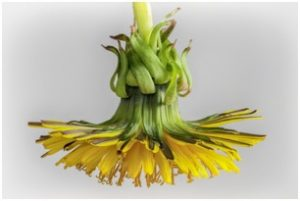 Botanical Studies by Mark Cassino in Photography