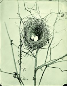 Division of Birds/Soundscapes and Photographs